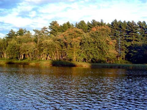 Renous rivier vissen